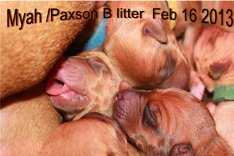 Puppies born a few days early